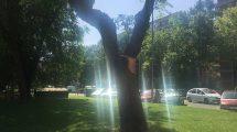 Día después árbol caído en Zarzaquemada (3)