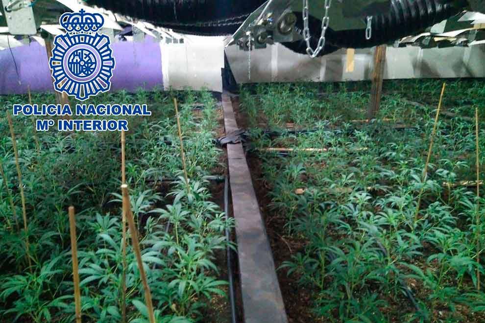 policia-invernadero-marihuana-leganes-2